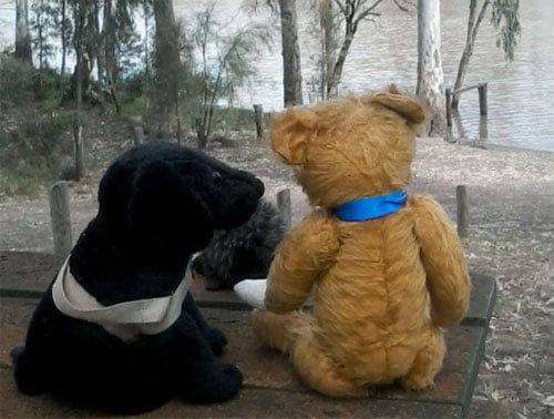 Brown teddy bear sits next to black dog stuffed toy looking over a river