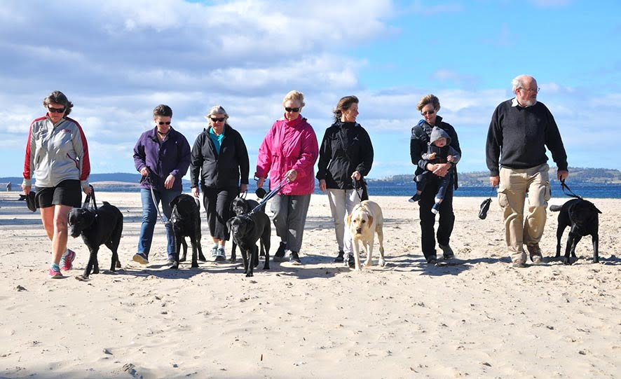 7 people taking 7 dogs for a walk on the beach