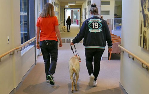 A back view of a Guide Dog instructor and a teenager walking along a corridor at VisAbility.