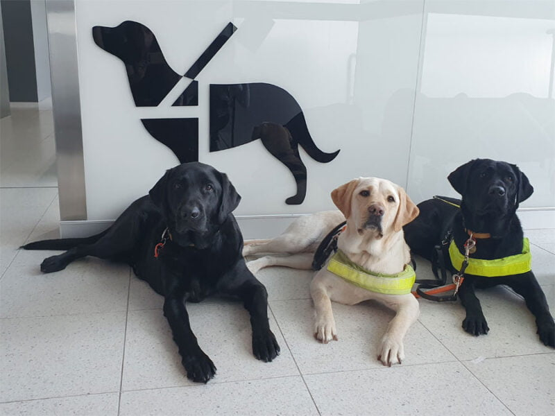 Three Guide Dogs in front of side of facility